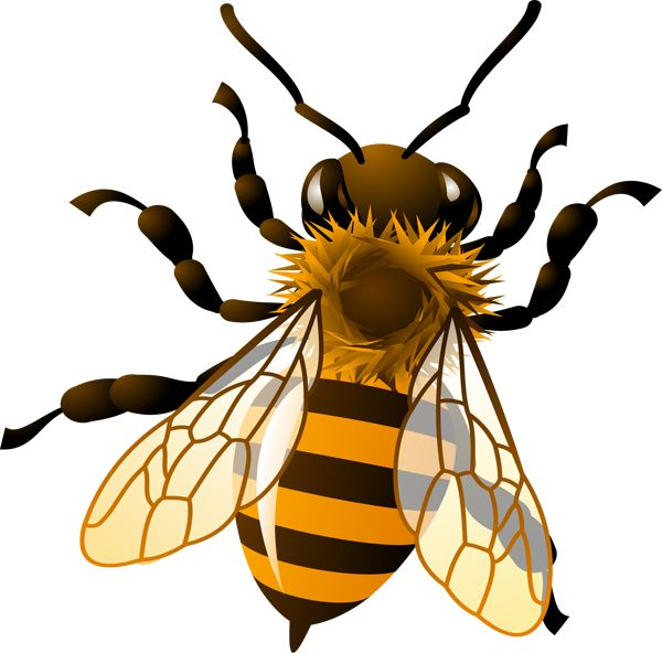 1000+ images about Bees on Pinterest.