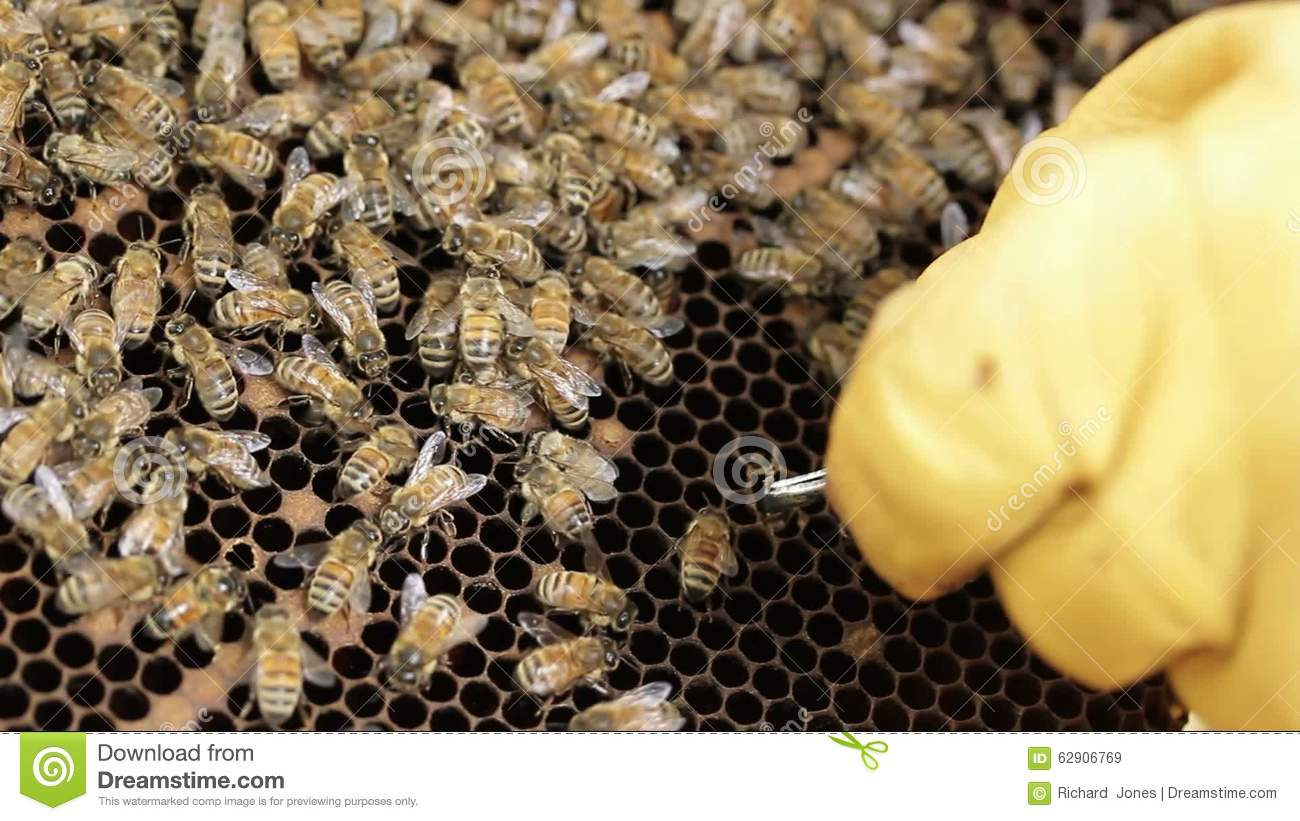 Honey Bee Hive Pests And Diseases Stock Video.