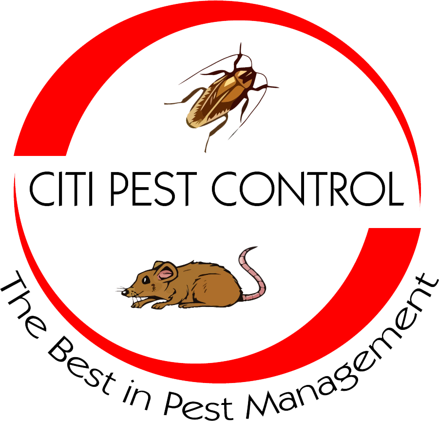 Professionals rodent control Citi Company Brooklyn NY.