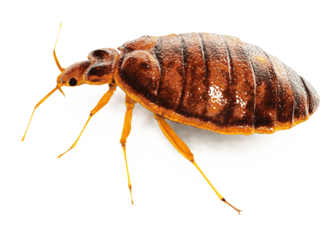 Bed Bug Inspection And Treatment.