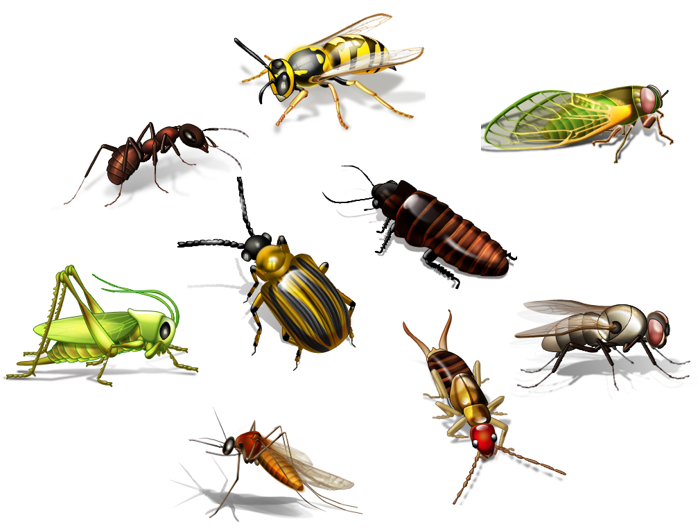 Insect PNG Images Transparent Free Download.