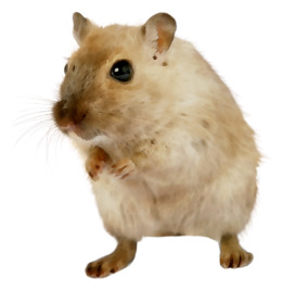 Pet Hamster clipart.