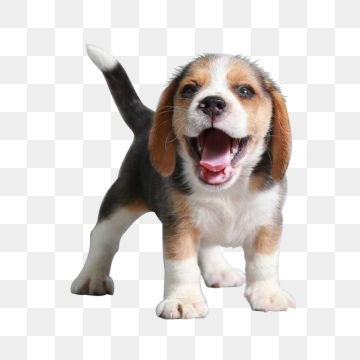 Dog PNG Images, Download 9,807 Dog PNG Resources with.