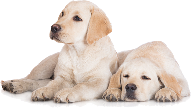 Dog PNG Image, Beautiful Dogs Transparent Pictures.