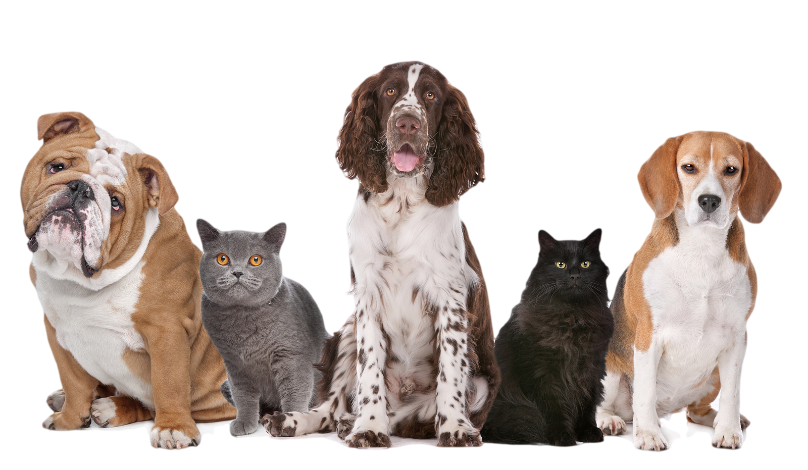 PNG HD Dogs And Cats Transparent HD Dogs And Cats.PNG Images.