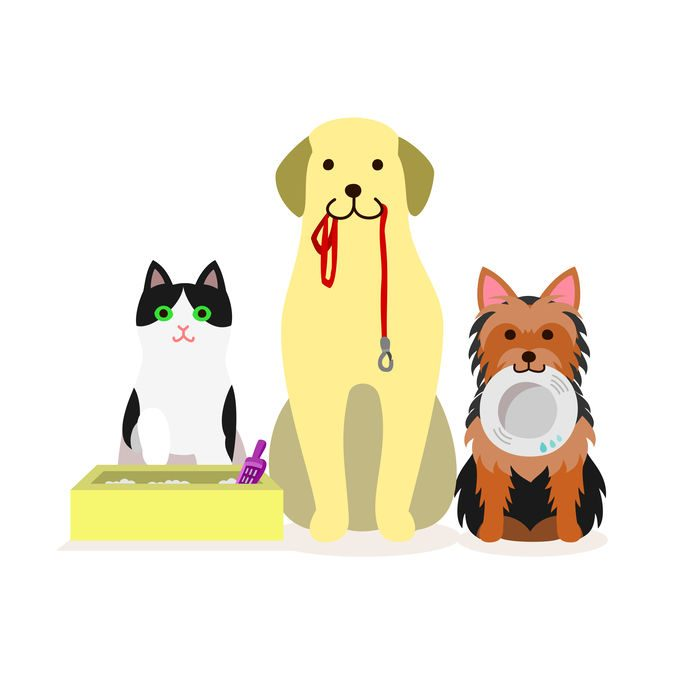 The pet sitter you have is not always the best pet sitting.