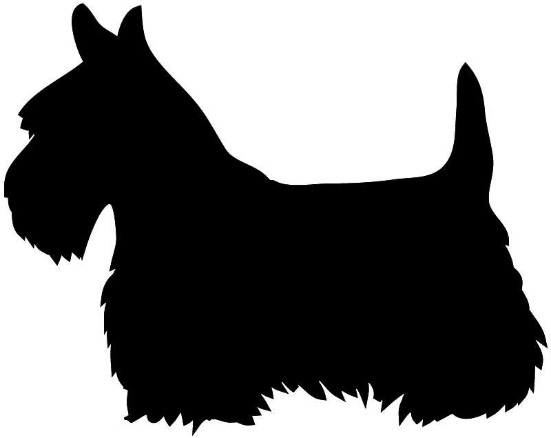 Dog Grooming, Myrtle Beach, SC, Sufside Beach, SC, Horry County.
