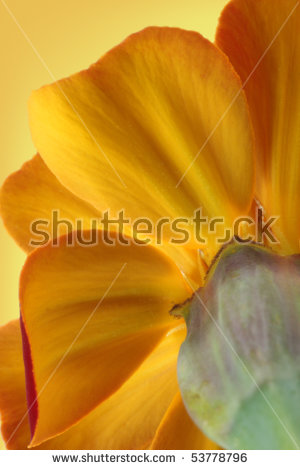 Whole Peach Leaf Stem Stock Photo 38034463.