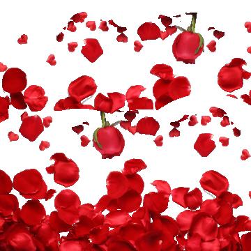 Petalos De Rosas Imágenes PNG.
