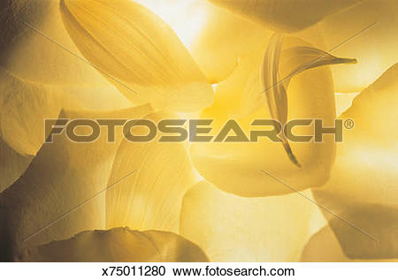 Stock Photography of Abstract close up of cream and soft yellow.