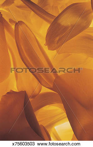 Stock Photo of Close up of elongated orange and yellow flower.