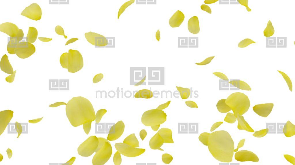 Rose Petals Yellow Tornado Gw 4 K Stock Animation.