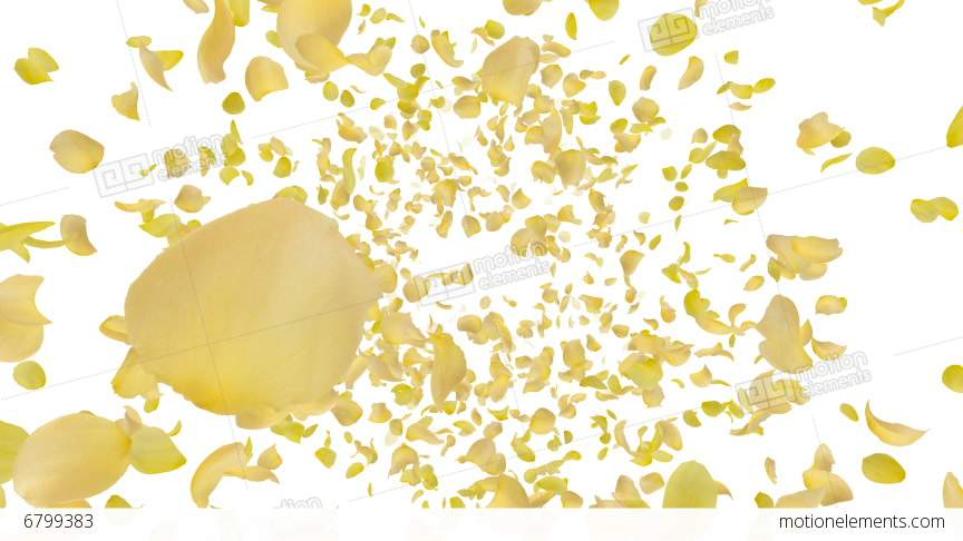 Rose Petals Yellow Front Aw 4 K Stock Animation.