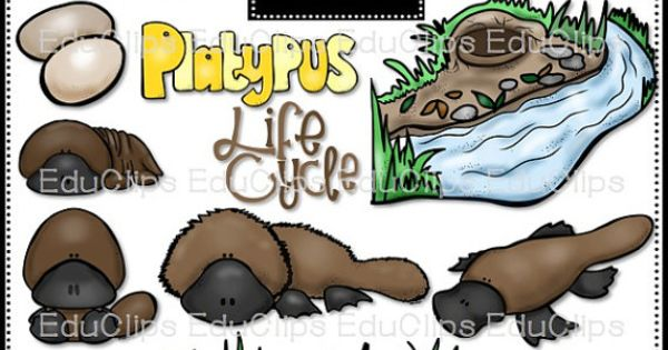 Platypus Life Cycle Clip Art Bundle.