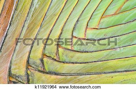 Stock Photo of Palm petiole pattern k11921964.