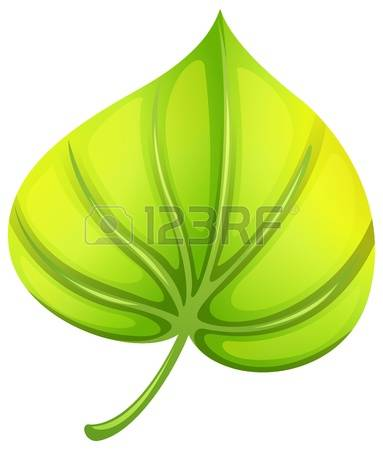 471 Petiole Stock Vector Illustration And Royalty Free Petiole Clipart.