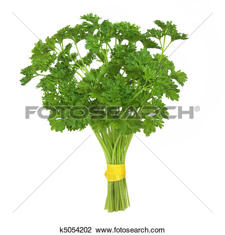 Stock Photo of Parsley Herb Plant k5054202.