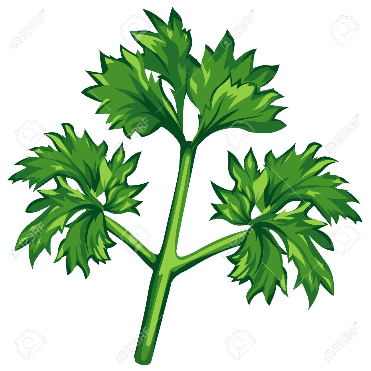 Parsley Illustration Petirsil clipart - Cli...