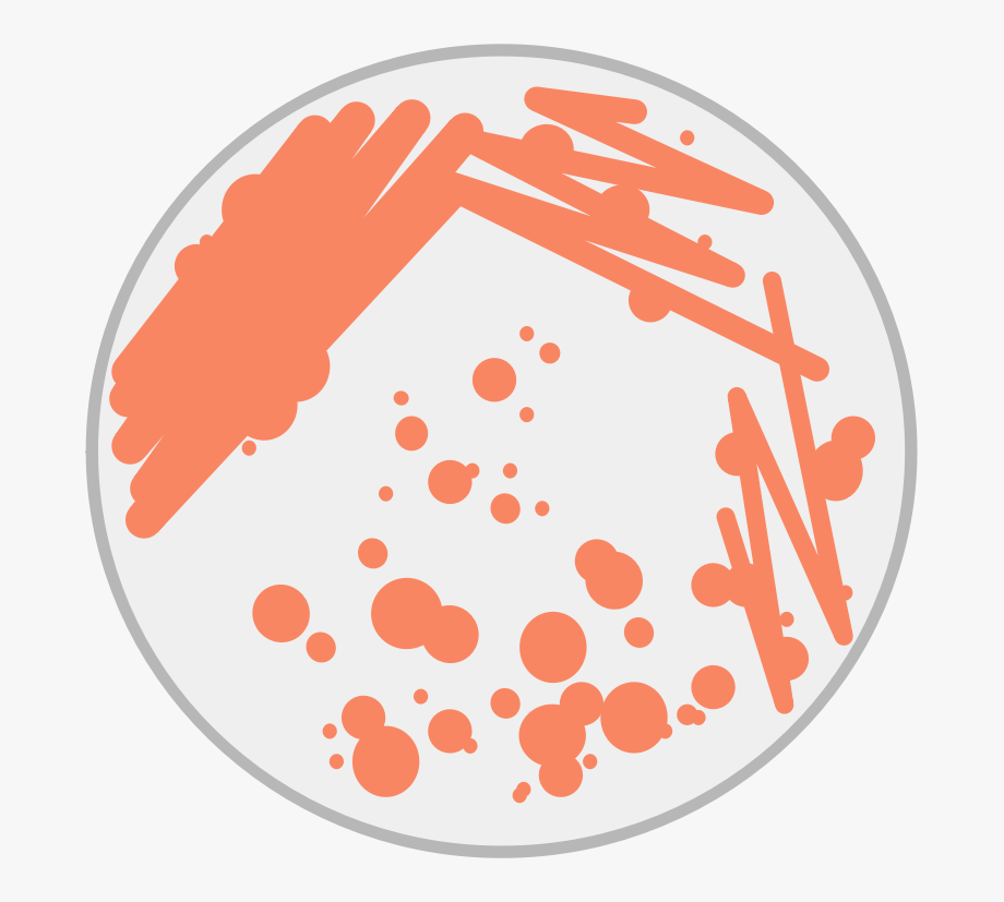 This Png File Is About Petri Dish , Bacteria , Science.