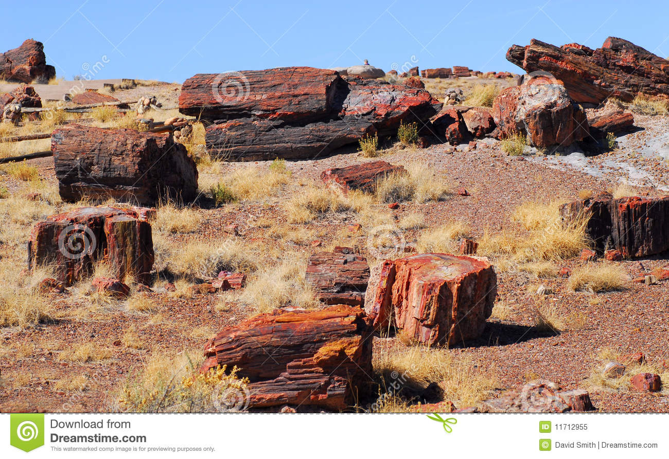 Petrified Forest National Park Sign Board Royalty Free Stock.
