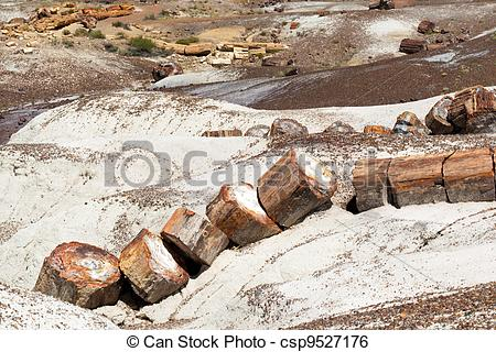 Stock Image of Broken Tree in Petrified Forest National Park.