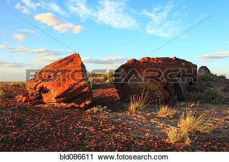 Stock Photography of Blue sky over petrified forest bld086611.