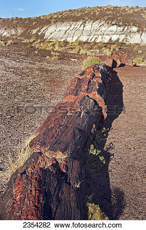 Stock Photo of Petrified Wood/Stone, Petrified Forest National.