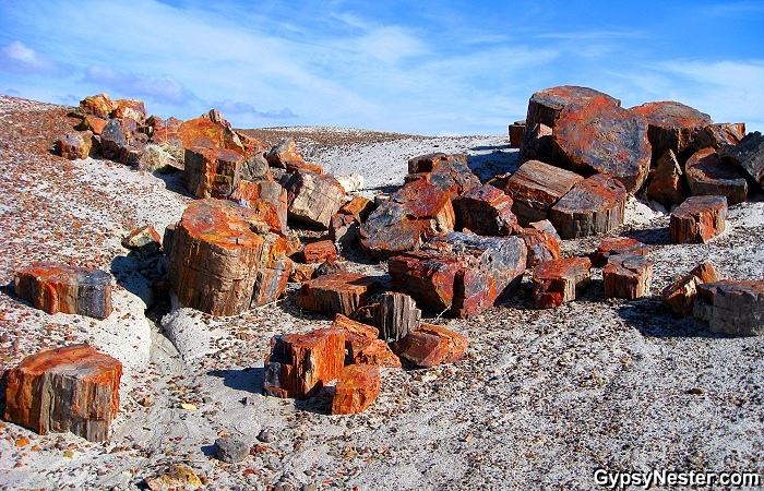Petrified Forest.