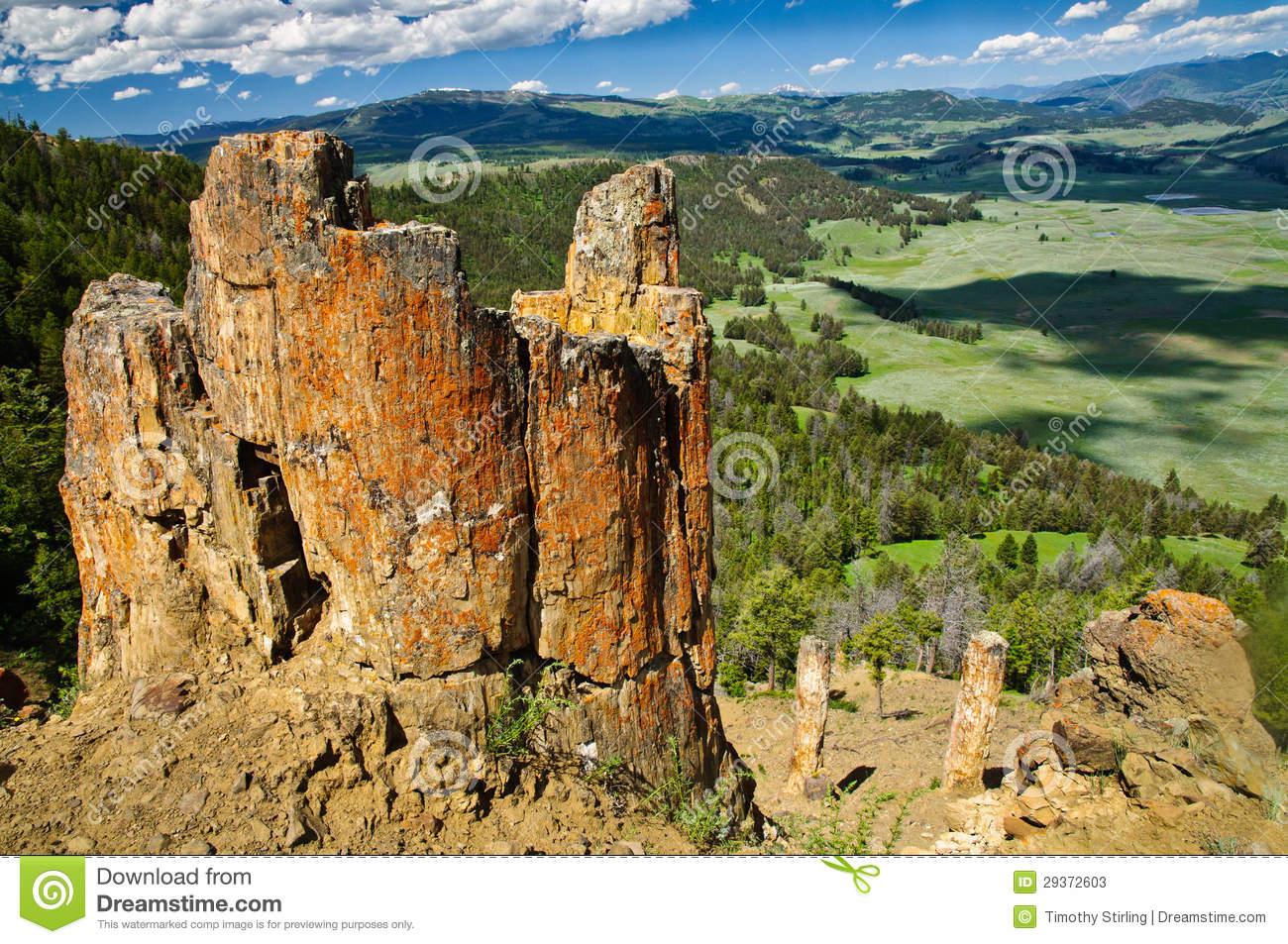 Petrified Forest, Yellowstone Stock Photography.