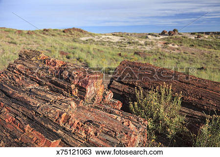 Stock Photo of Petrified Forest National Park x75121063.