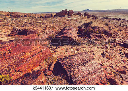 Picture of Petrified forest in Argentina k34411607.