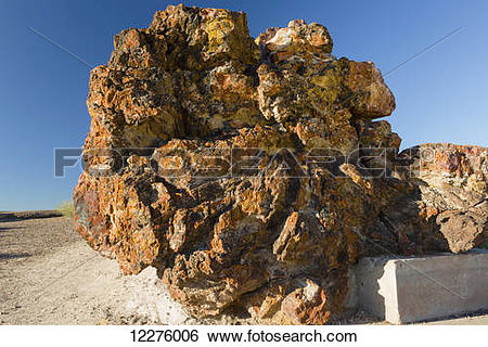 Stock Images of Old Faithful petrified log, Petrified Forest.