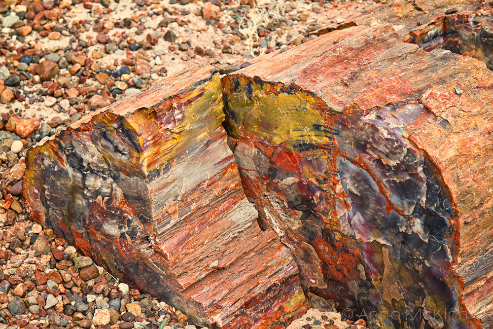 Amazoncom petrified wood