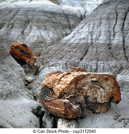 Stock Photography of Petrified Wood Fossils.