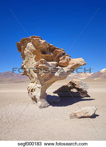 Stock Photo of South America, Bolivia, petrified tree at Salar de.