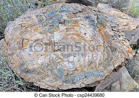 Pictures of Petrified tree stump in the Karoo National Park.