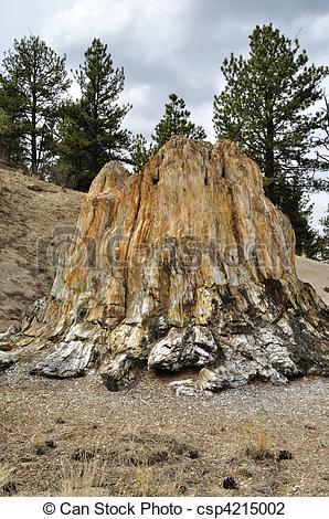 Stock Photo of Petrified Redwood Tree Stump.