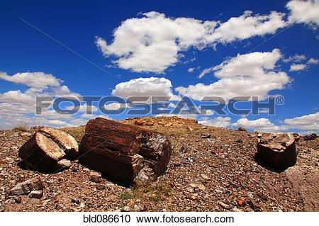 Stock Photography of Blue sky over petrified tree trunk bld086610.
