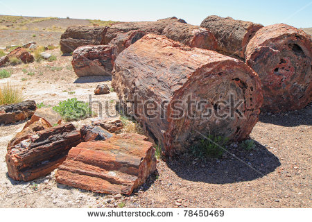 Petrified Wood Stock Images, Royalty.