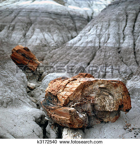 Stock Photography of Petrified Wood Fossils k3172540.