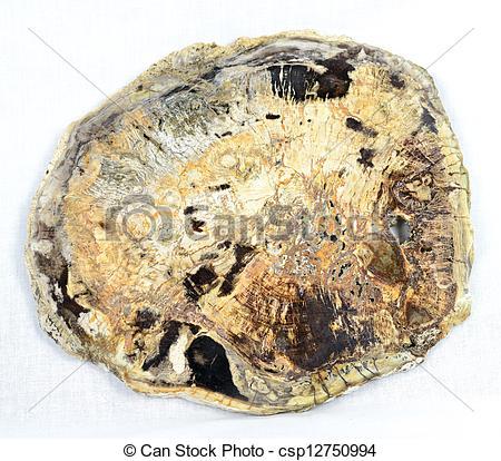 Stock Photographs of Petrified wood slice.