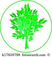 Petroselinum Clipart EPS Images. 23 petroselinum clip art vector.