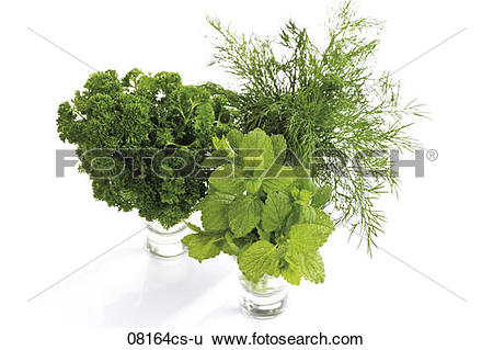 Stock Images of Lemon balm (Melissa officinalis) curley parsley.