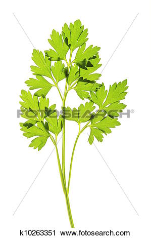 Stock Photography of parsley.