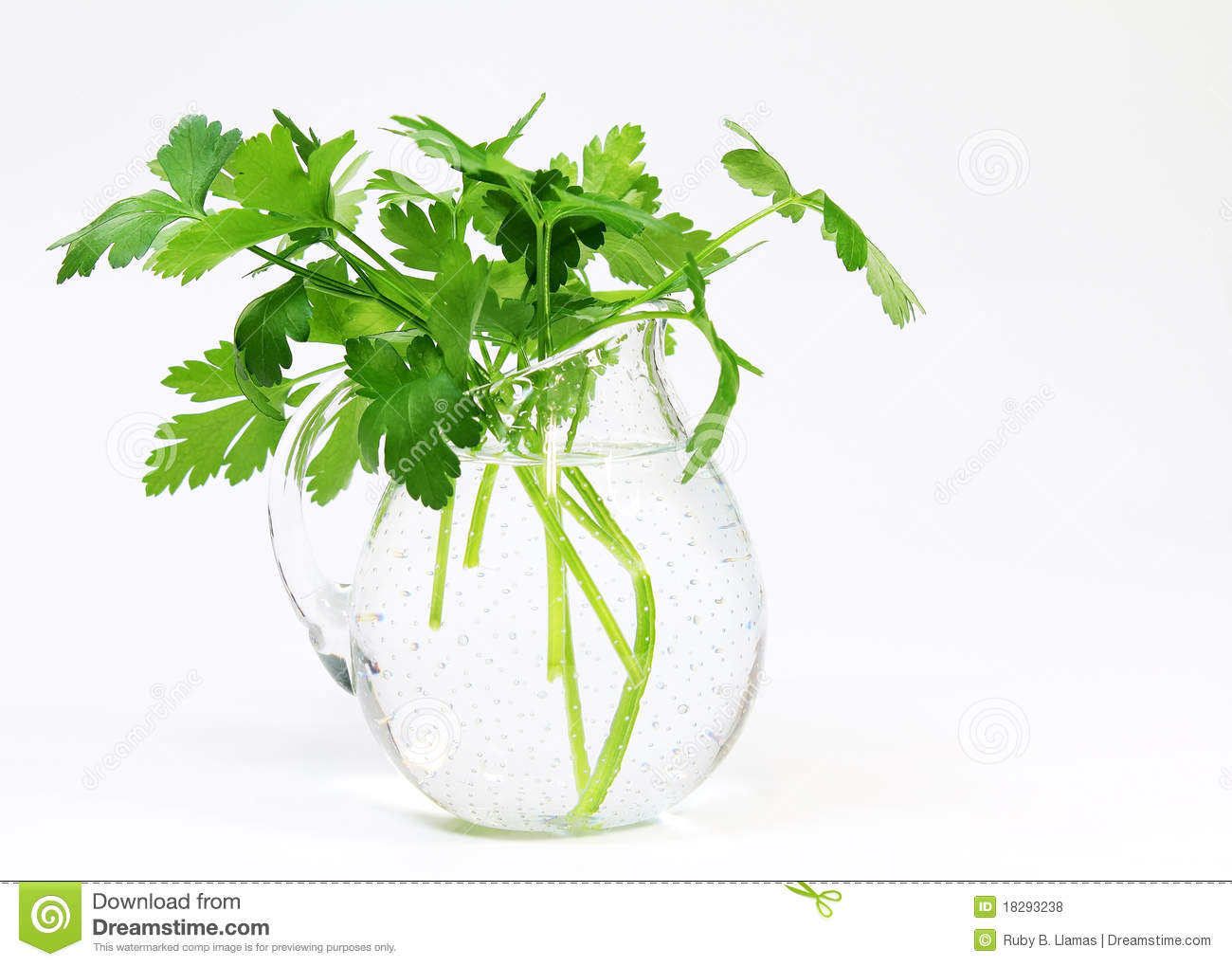 Parsley (Petroselinum Crispum) Vase Royalty Free Stock Photos.