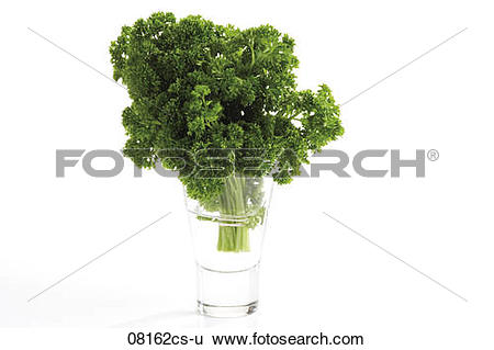 Stock Images of Curley parsley (Petroselinum crispum) in water.