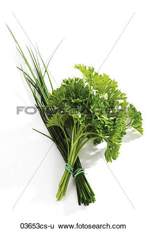 Stock Images of Chive, Parsley, Allium schoenoprasum, Petroselinum.