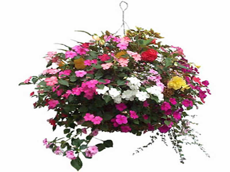 What are the best flowers for a hanging basket.