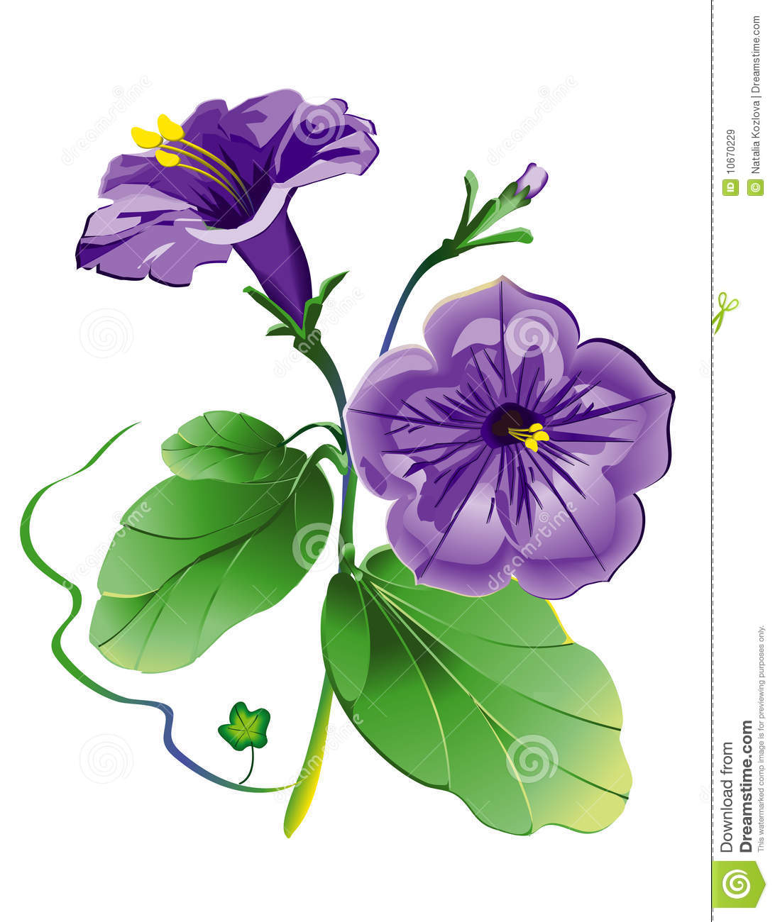 Petunia Flower, Model With EPS File Royalty Free Stock Images.