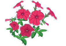 Flower Petunia Stock Illustrations.